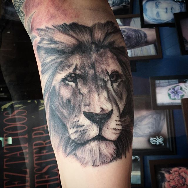 Some-lion-action-by-Drew-from-earlier-today-liontattoo-lion-blackandgreytattoo-blackandwhite-tattoo-